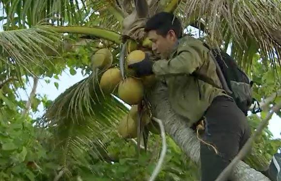 《我们的征途》陆毅化身鲁滨逊荒岛求生 爬树摘椰子险些滑落